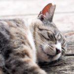 ダイエットに大事な睡眠とは?実践結果をご報告